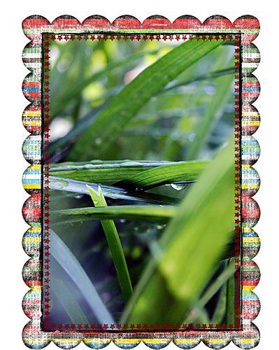 Grassframed